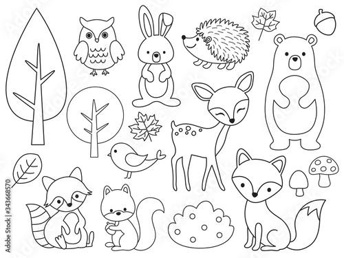 Vector line set of Woodland Animals. Animal outline for coloring including bear, deer, fox, rabbit, raccoon, squirrel, hedgehog, owl, bird. #343668570