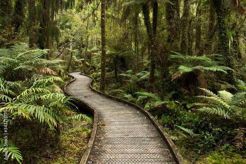 Kahikatea Swamp Forest Walk at Ship Creek in Mount Aspiring National Park,West C Wallpaper Mural