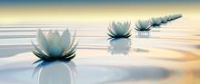3d Lots Flower On Calm Ripple Water