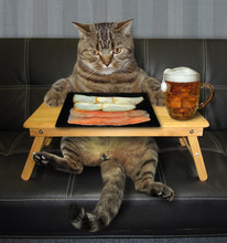 The Beige Cat Is Eating Slices...