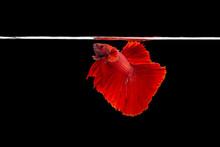 Beautiful Movement Of Red Bett...
