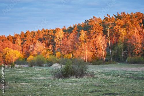 Fototapeta Zachód słońca w Puszczy Białej, kolorowe drzewa obraz