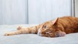 Ginger cat lying on a bed stretching his paws and looking aside.