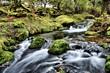 canvas print picture - stream in the Dartmoor forest in autumn