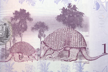 Giant Armadillo A Portrait Fro...