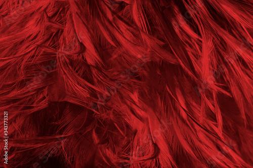 Beautiful dark red maroon feather pattern texture background - 343773321