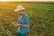 Leinwandbild Motiv Farmer flying drone in cultivated sorghum field