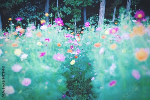 Close-up Of Colorful Flowers Growing In Field Fototapeta