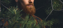 Close Up Shot Of Red Beard. Hi...