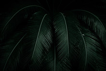 Palm Leaves On Dark Background...