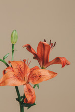 Flores Naranjas Minimalistas