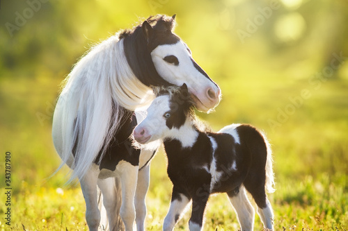 Beautiful piebald pony foal with mareoin green pasture Wallpaper Mural