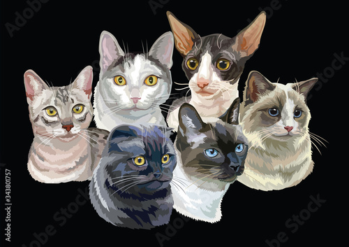 Fototapeta Vector illustration with cats black