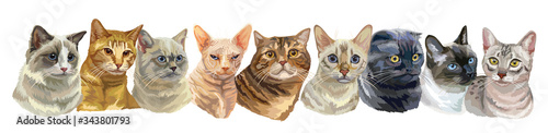 Fotografie, Tablou Vector illustration with cats standing in a row