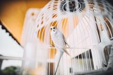 White Bird In A White Cage