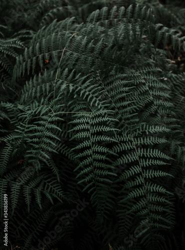 Fotografía Textura de helechos en mitad del bosque