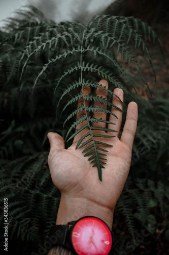 Fotomural Mano de un persona con un reloj en la muñeca sosteniendo una hoja de un helecho