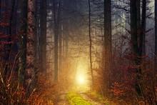 Sun Shining Through The Trees ...