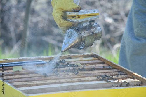Bee smoker with apiarist working in his apiary on farm Canvas Print