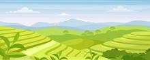 Green Tea Plantation Landscape Vector Illustration. Cartoon Flat Rural Farmland Fields, Terraced Farmer Tea Plantation, Hills With Greenery And Mountain On Horizon. Asian Agriculture Background