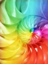 Nautilus Shell Rainbow Stock Fibonacci Stock Photo