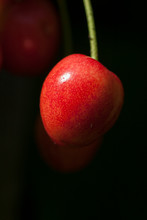 Single Red Cherry Hanging Against A Dark Backround