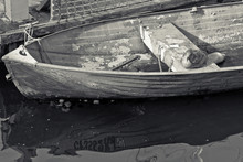 Herring Gull Resting In Dinghy...