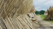 Jute Was Once Known As The Gol...
