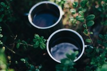 Two Cups Of Tea In The Bilberry