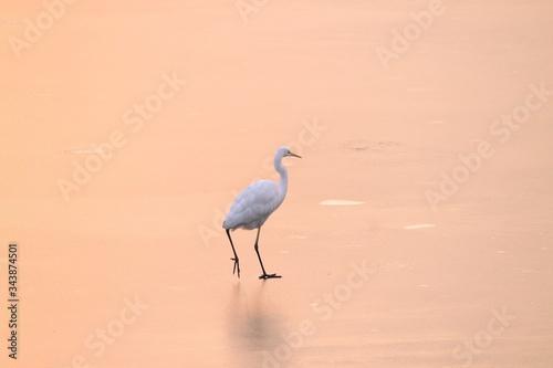great blue heron ardea cinerea Canvas Print