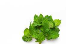 Fresh Green Leaves Of Mint, Lemon Balm, Peppermint Isolated On White Background Top View Copy Space. Mint Leaf Texture. Ecology Natural Layout. Mint Leaves Pattern Spearmint Herbs Nature Background