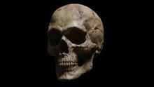 3d Render Of Human Skull Isola...