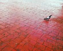 High Angle View Of Pigeon On C...