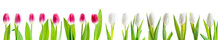 Set Of Pink And White Tulips I...