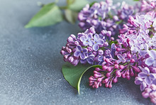 Spring Lilac Flowers On Gray S...