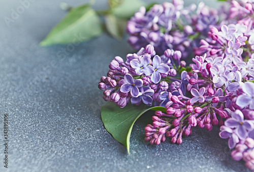 Fotografie, Obraz Spring lilac flowers on gray stone background.  Copy space