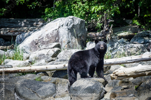 Close-up Of Bear Standing On Rock Canvas-taulu