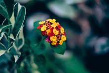 Close-up Of Orange Marigold Bl...