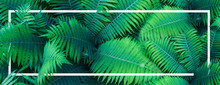Summer Tropical Background, Fern Leaves  With White Frame