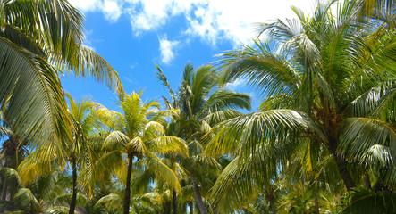 Panel Szklany Do sypialni Palm trees under the blue sky on a tropical island