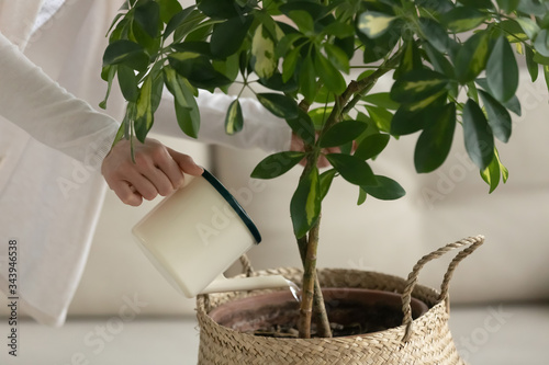 Vászonkép Close up of young woman hold pot watering plant at home, attentive female or hou