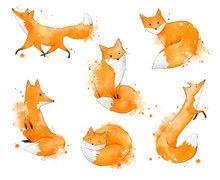 Set Of Watercolour Foxes, Hand Painted Illustration
