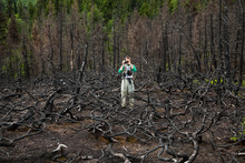 Man Photographs Burned Dead Trees, Kenai Peninsula, Alaska