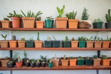 Assorted Cactus And Succulent ...