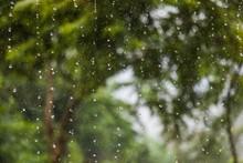 Huge Drops Of Rain Fall From T...