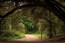 Forest Path On The Norfolk Coast