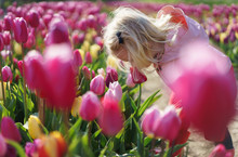 Little Girl Smelling The Pink Tulips Flowers.