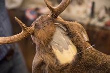 The Bust Of A Deer Mount In Pr...