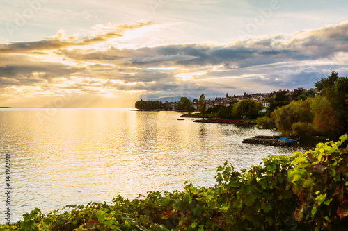 Foto Sunset over the lake geneva and grape plants in the foreground, Switzerland