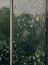 Vine Plant Behind Glass Window